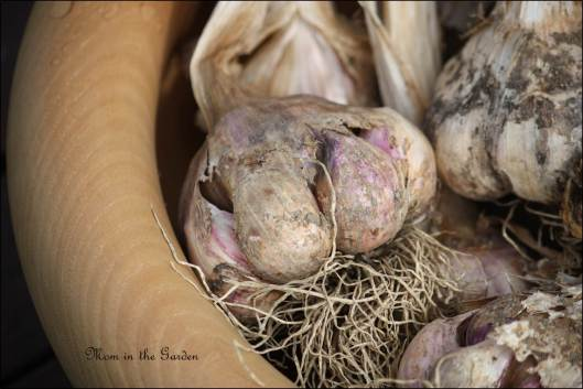 Vallelado garlic