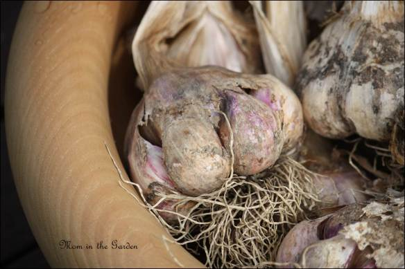 Vallelado garlic