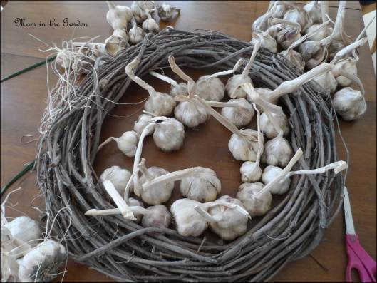 loads of organic garlic