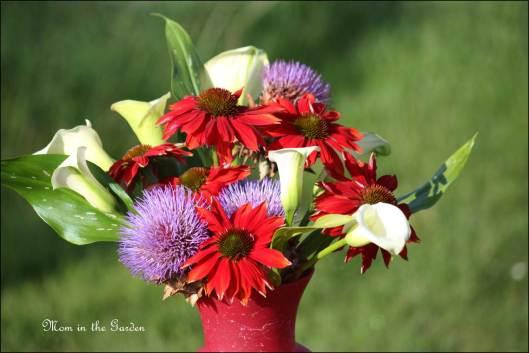 Echinacea Salsa Red, Globe Artichoke, a