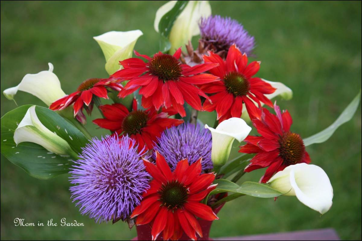 In a Vase on Monday: The color Red! (Echinacea Salsa Red to be exact)