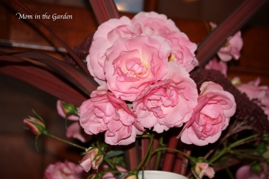 climbing roses up close
