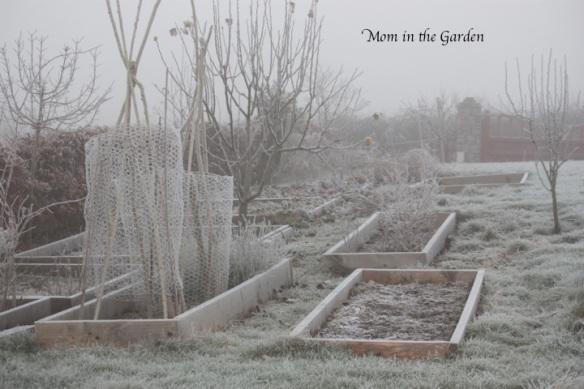 Fruit garden view