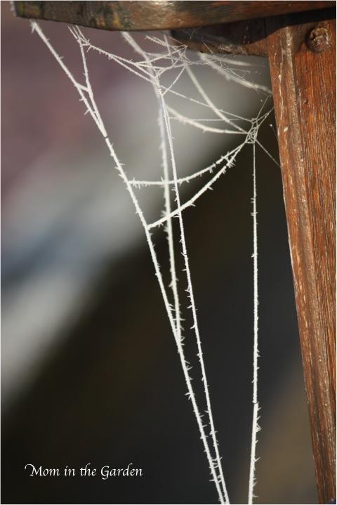 A frozen spider's web