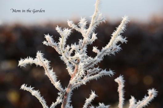 Frosty Pics 3