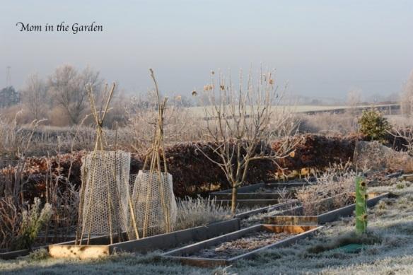 Fruit garden in the sun