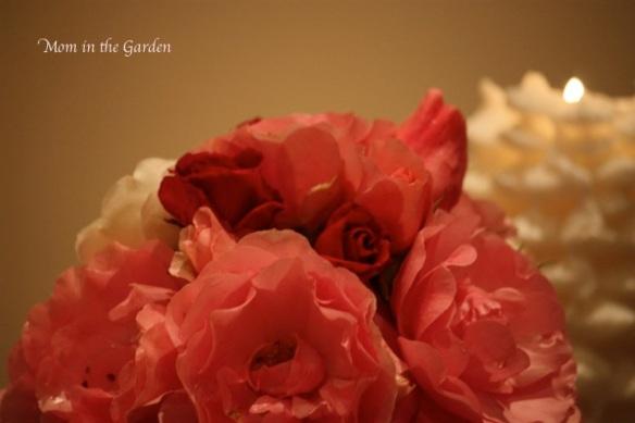 Roses up close