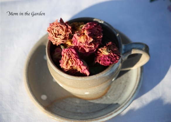 Dried roses from the garden