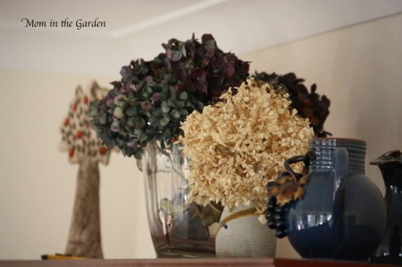 Dried flowers from the garden