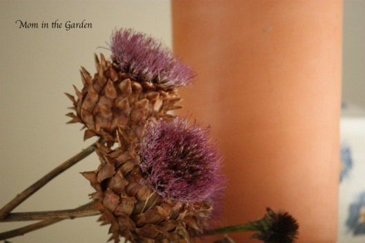 These Globe Artichokes have still kept their colour!