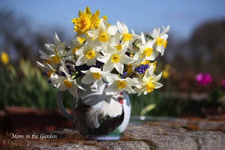 my jug floweth over with daffodils