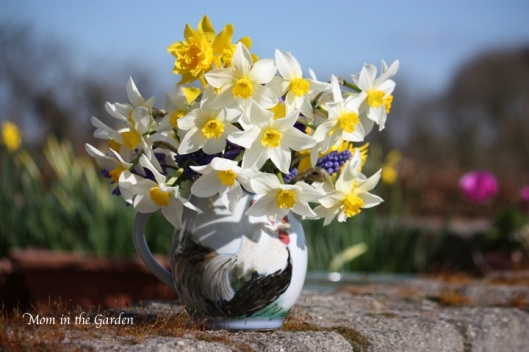my jug floweth over with daffodils