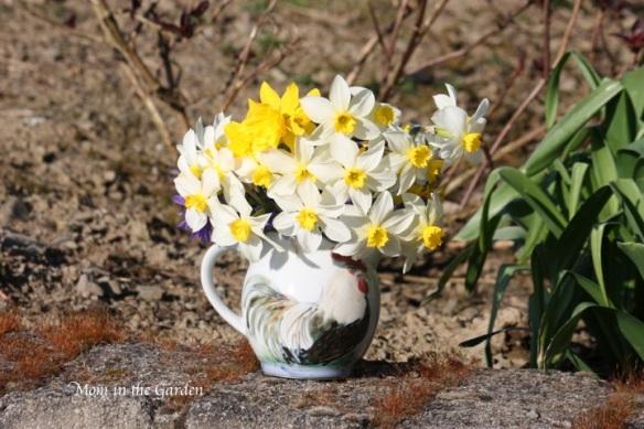 loads and loads of daffodils