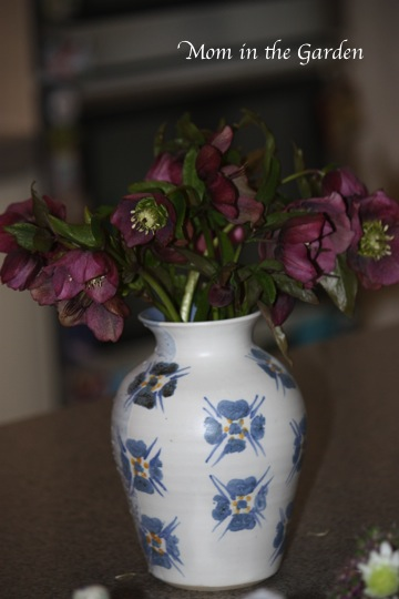 Hellebores from the garden