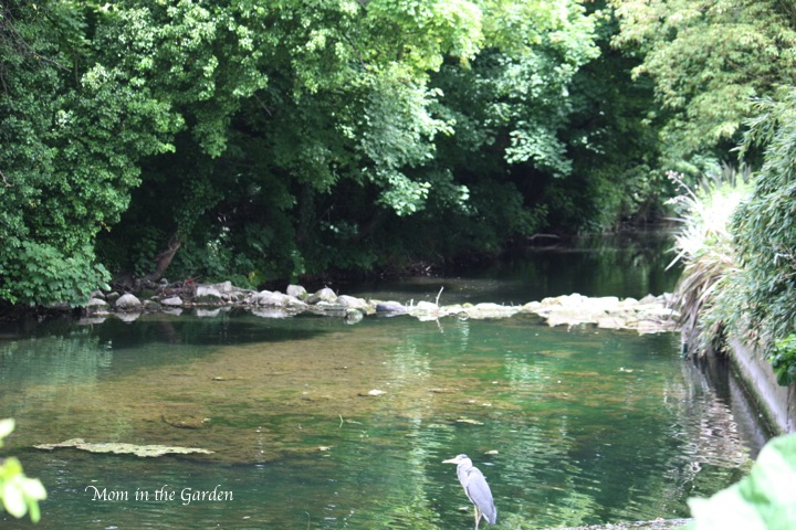 heron by the water