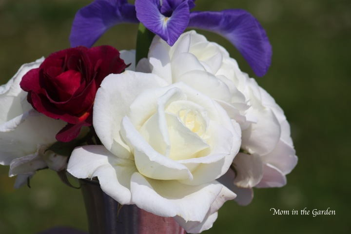 Roses and Iris from the garden