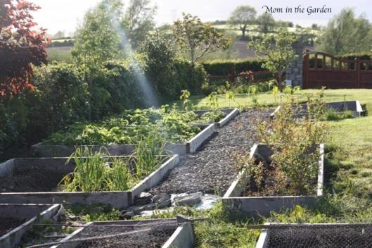 A look down the garden in June