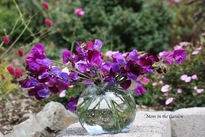 blending well in the garden