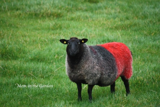 Black and Red: the colors of Killaney, County Monaghan
