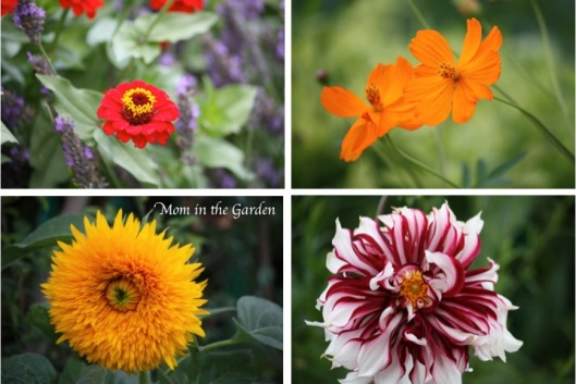 Monets Flowers collage orange reds