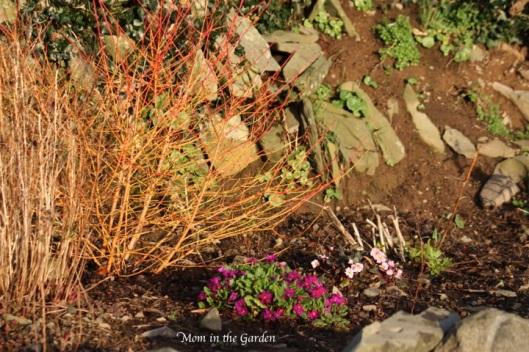 Ditch Wall Garden