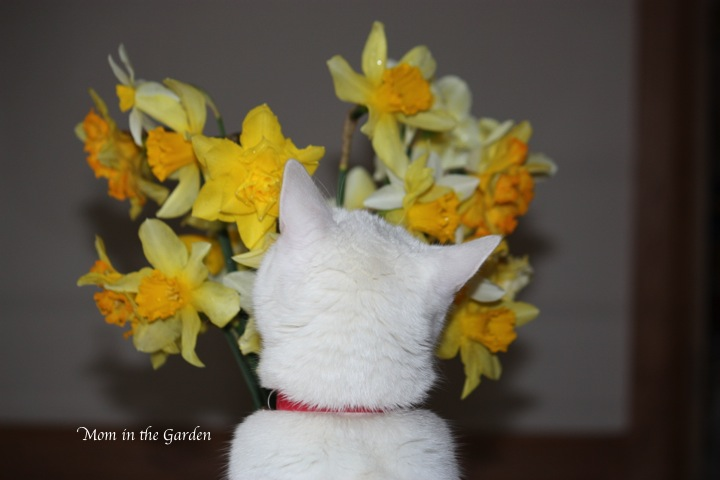 Kitty smells the flowers