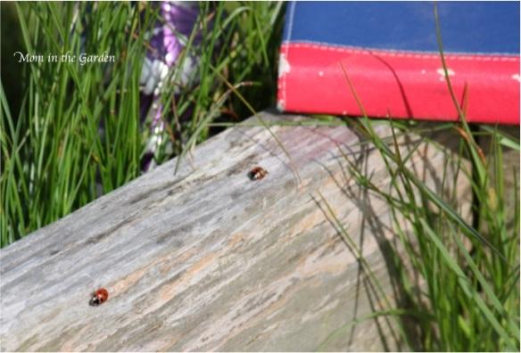ladybird / ladybug