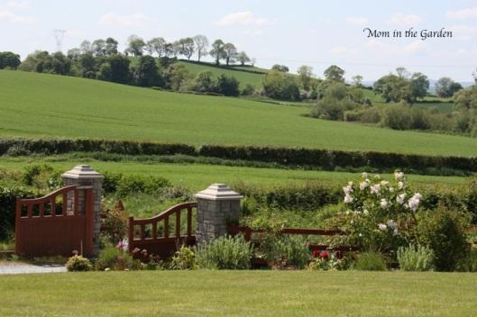 View in the garden