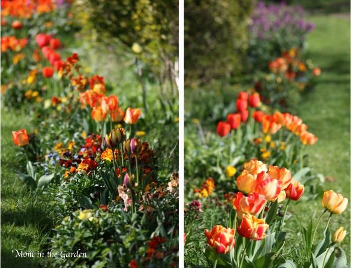 Flowers from a roadside garden near my home