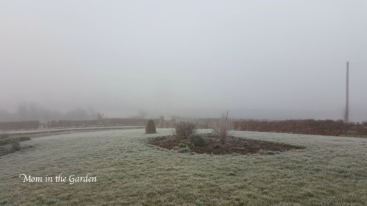 a frosty view of the garden in February