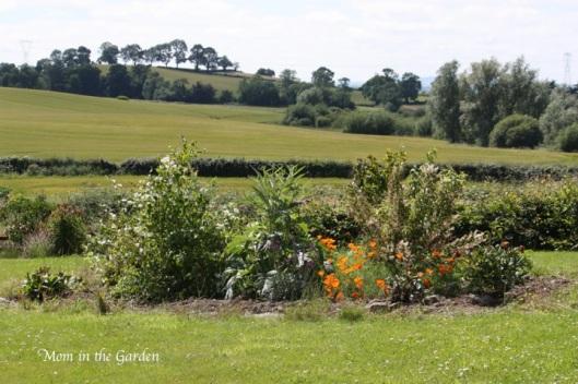 in full bloom in July with Philadelphus (Mock Orange), Globe Artichokes, Deutzia (scabra), peony, bergenia, potentilla, and various wild flowers