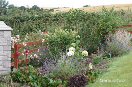 The front gate garden bed in full view