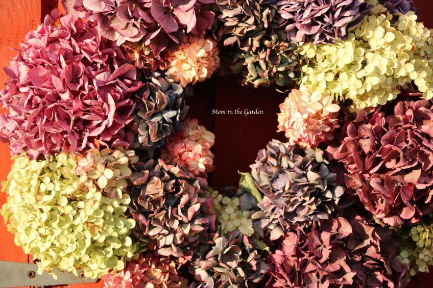 dried hydrangea wreath up close