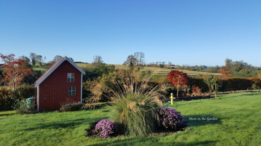 fall view of garden with ornamental grass, aster, playhouse and water butt