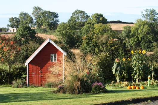 fall garden with ornamental grass, aster, pumpkins, sunflowers and playhouse