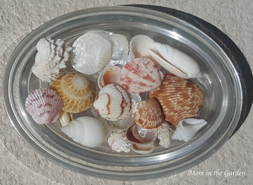 container of sea shells
