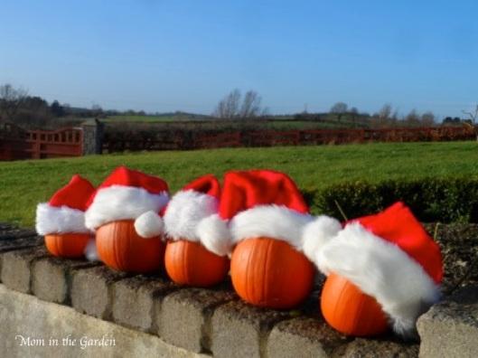 pumpkins with santa hats