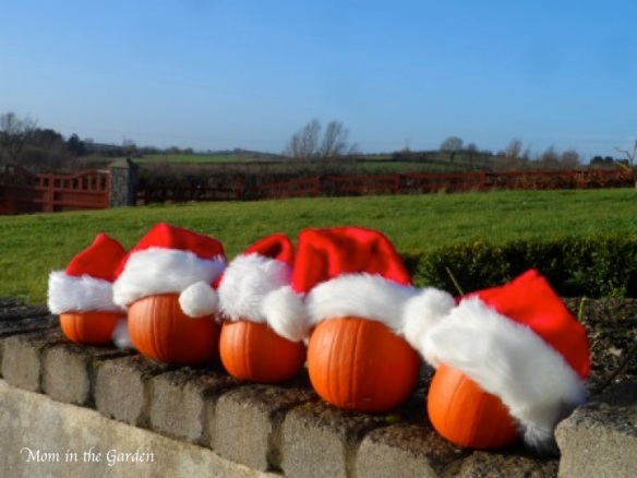 pumpkins with santa hats