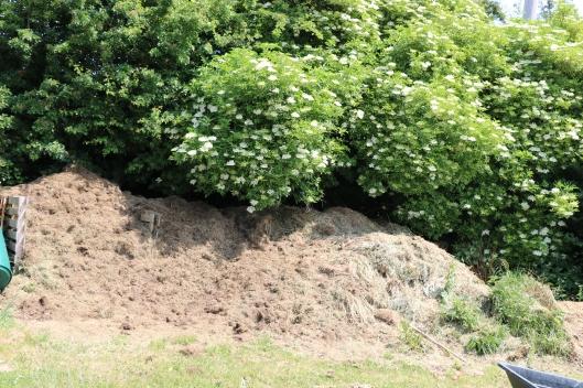 compost heap under Elder trees