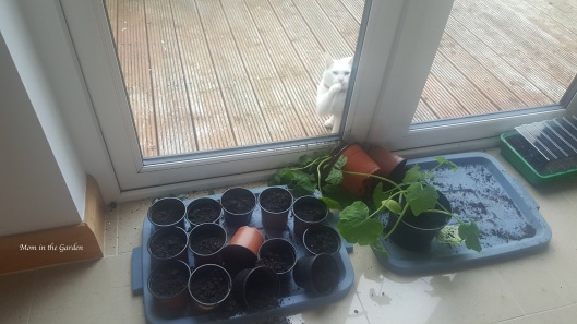 plant pots inside with cat
