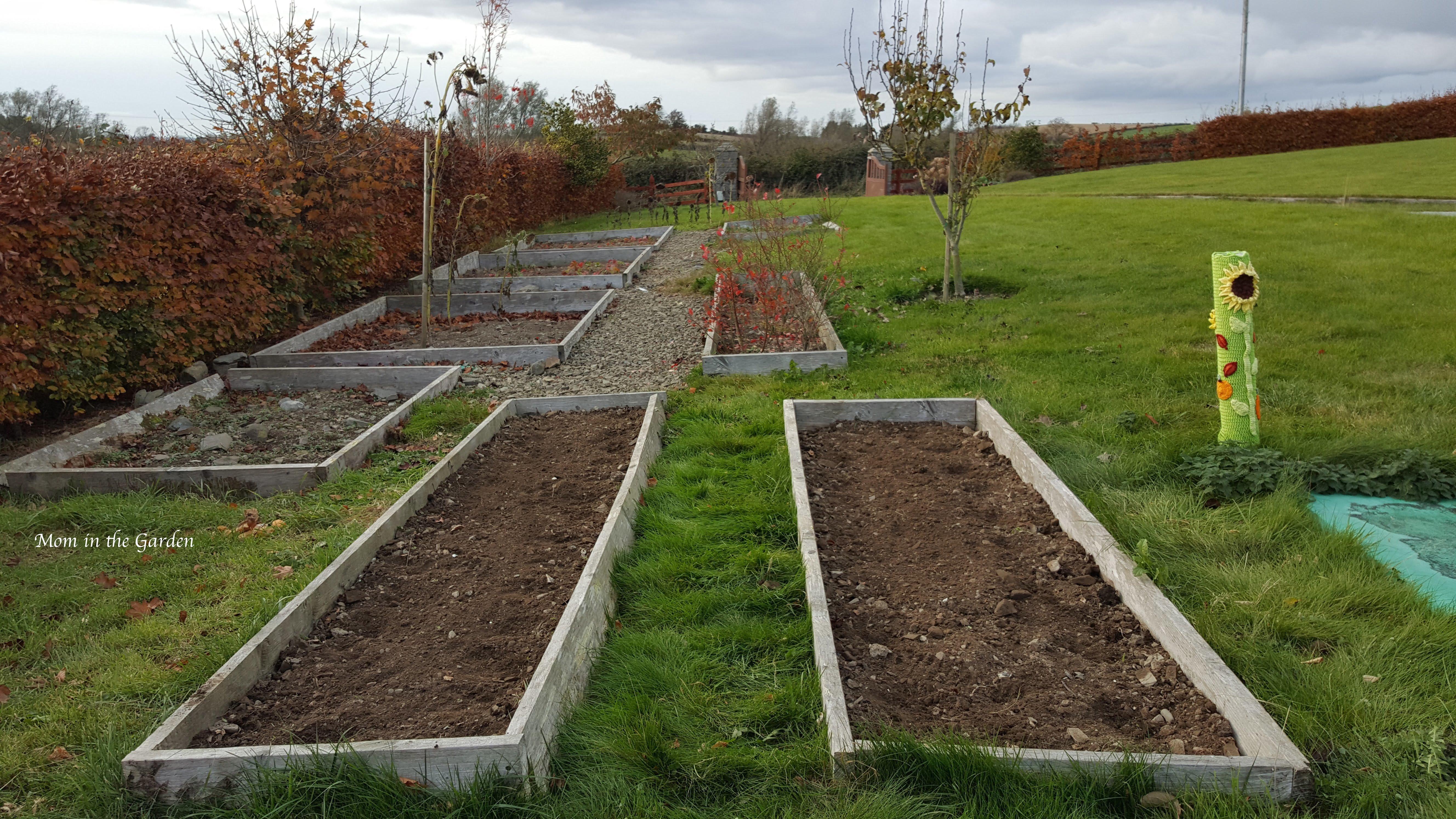 freshly planted garlic beds