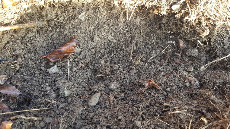 soil from compost heap