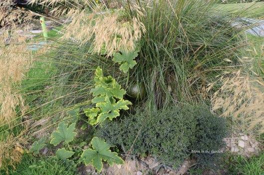 pumpkin growing in an ornamental grass