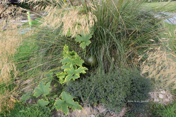 pumpkin growing in an ornamental grass