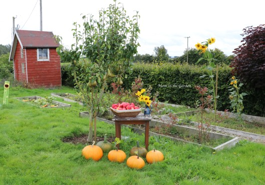 pumpkins, apples, pears, sunflowers in the garden