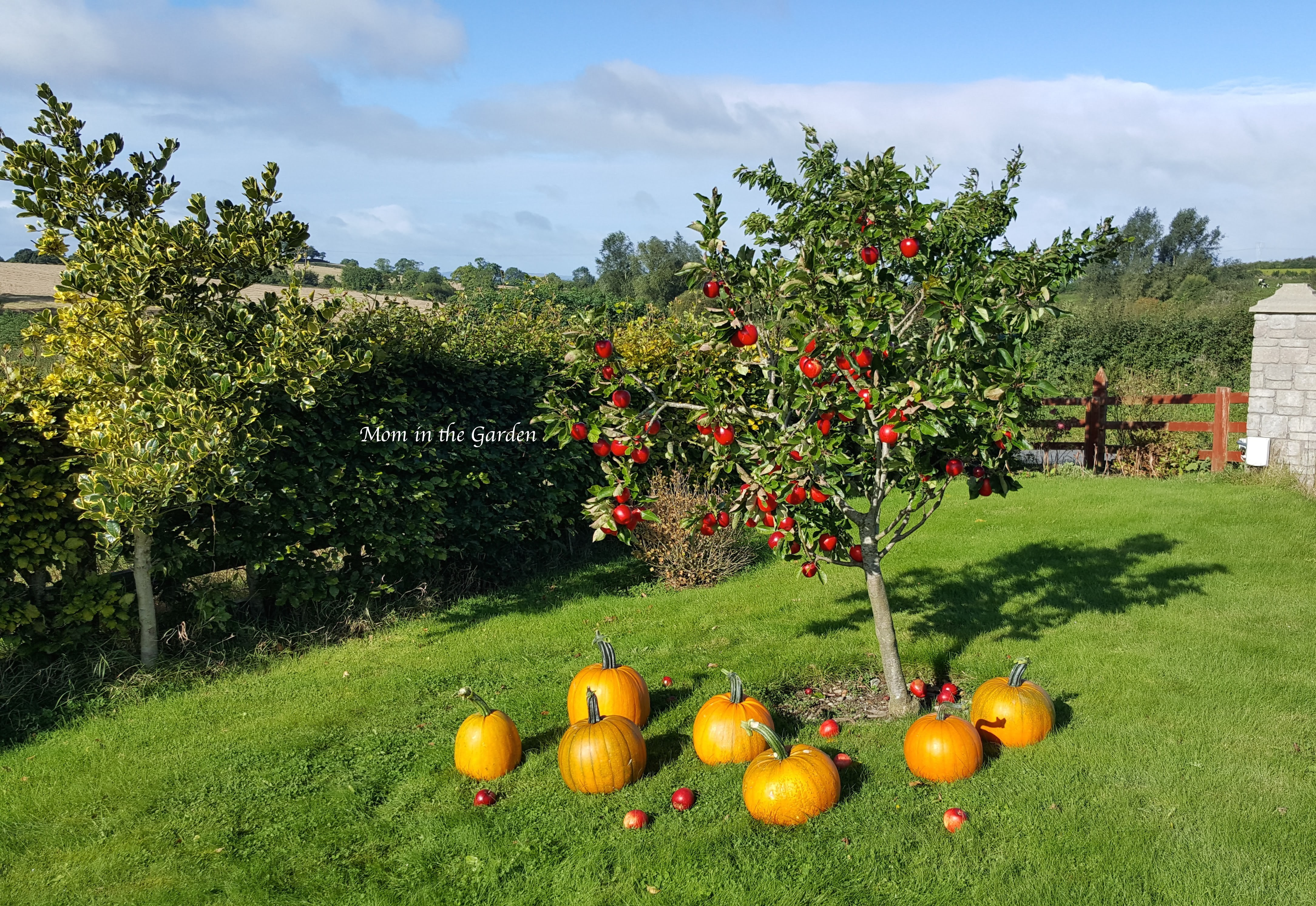 pumpkins and red apples