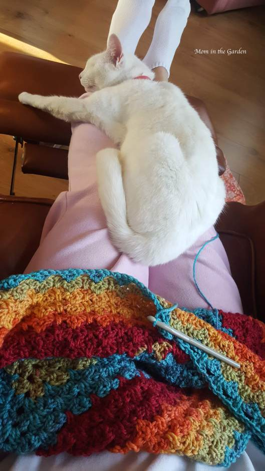 cat on lap with crochet poncho in progress
