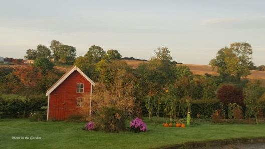 October garden with mums and pumpkins