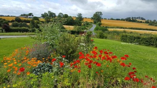 wild flower garden in July