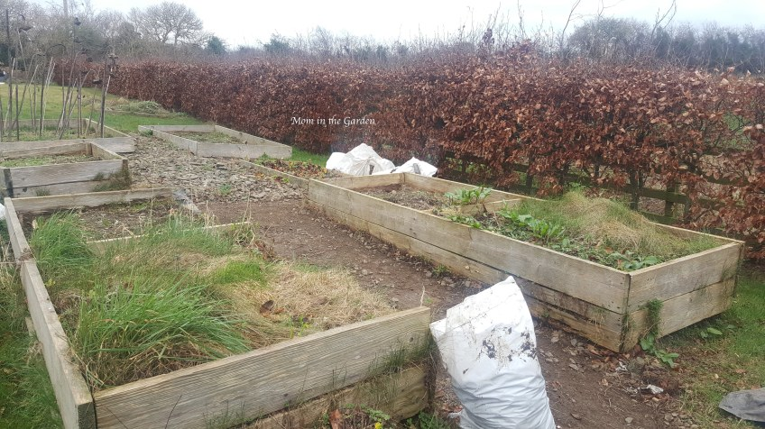 garden beds covered in weeds with cleared path